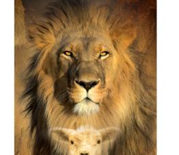 lam leeuw goedbericht
